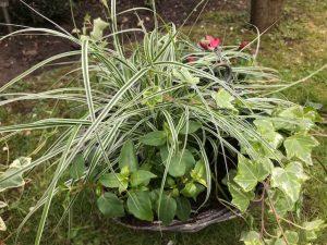 1-basketgrassclose